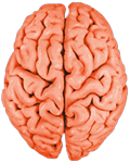 how to develop brain memory in hindi